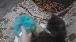 Прикол с котом я просто хотела поиграть