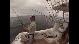 Black Marlin fishing on board Adios - Gold Coast