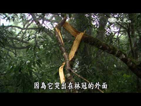大愛-發現-20150725 福至山林 - 福山植物園