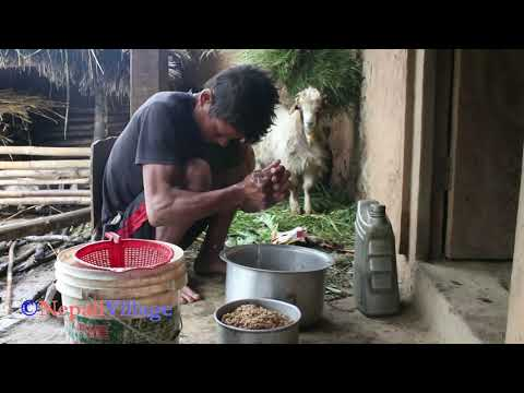 Making alcohol of maize by using  traditional technology ll Primitive technology