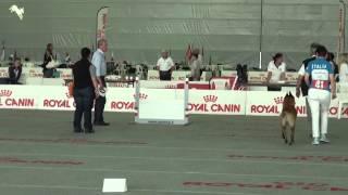 World obedience fci championship Torino 2015 - Erak / Cini