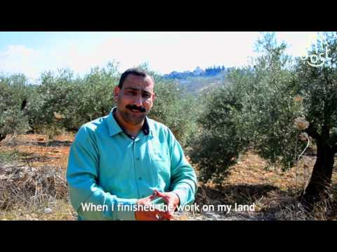 Olive Oil Harvest Palestine - M.OOST videos