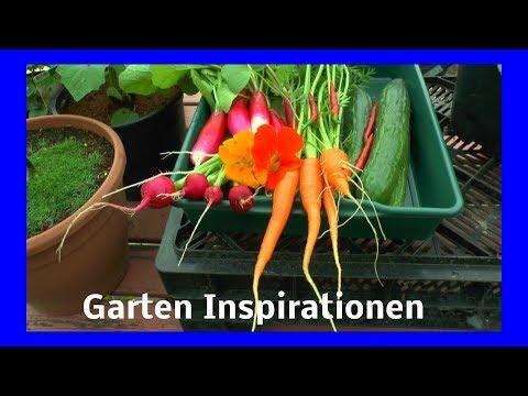 Gemüse ernten Gurken Möhren Radieschen Chili aus Hochbeeten und Töpfen Inspirationen für dich