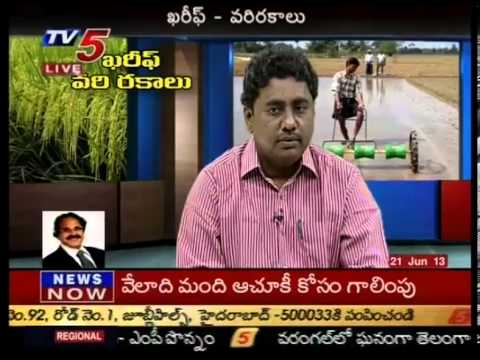 kharif paddy varieties - annapurna -  TV5