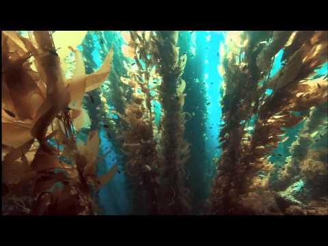 Ocean Odyssey 2010 720p part 2 (HD)