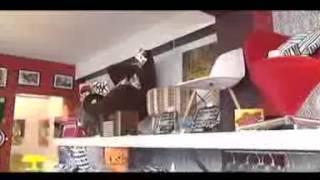 MOLTOVIVACE, tienda de muebles, diseño y tendencias. Providencia, Santiago de Chile.