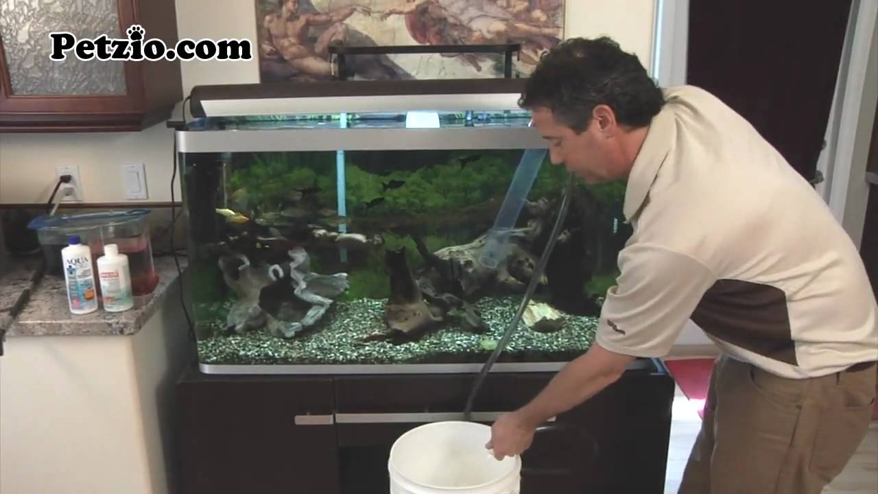 Fish tank maintenance youtube fish tank maintenance for Fish tank cleaning service