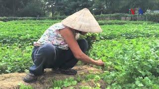 'Triệu phú' vườn rau Việt giữa thủ đô nước Mỹ
