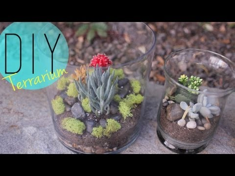 Diy Indoor Garden   Cactus Terrarium  How To  By Anneorshine