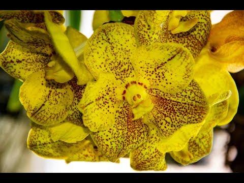 Orchideen - Vanda & Co. Intro - VLOG  - #seigartenschlauer