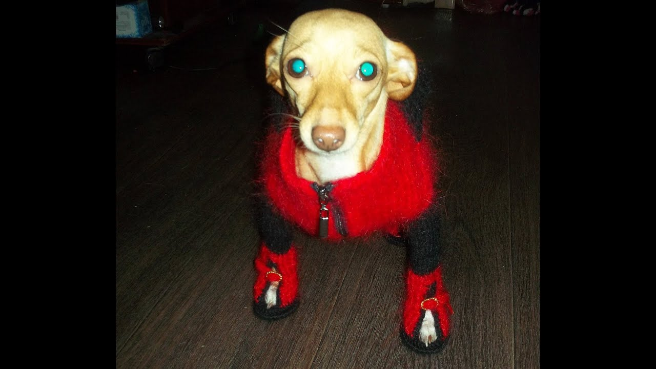 Ботиночки для собак своими руками видео