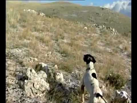 Rock Partridge (Alectoris Graeca). Hunting, Nesting and History. A TS TV Production. www.tstv.gr