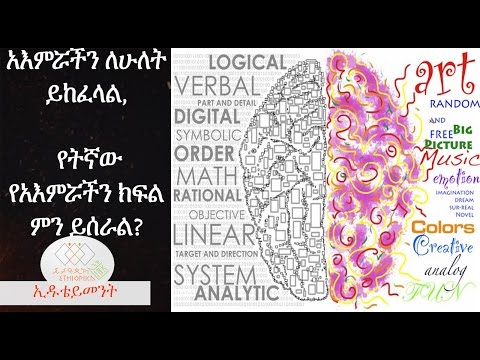 Ethiopia: What are the functions of the left and right brain? - EthiopikaLink