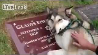 亡くなった御主人のお墓の前で泣き崩れる犬