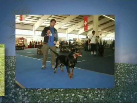 SIDNEY  Tesori Etruschi  Rottweiler Campione Bellezza – Florence Firenze Sidney HIgH -