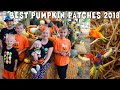 Birds Land On Michael's Head || Mommy Monday Halloween Special -