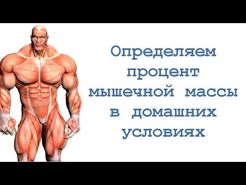Набрать мышцы в домашних условиях
