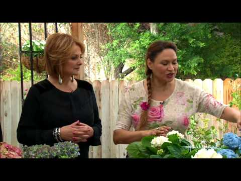 Home & Family - Hydrangea Mania With Shirley Bovshow