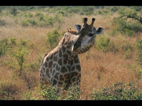 Kruger National Park (Africa) - Krüger nemzeti Park (Afrika)