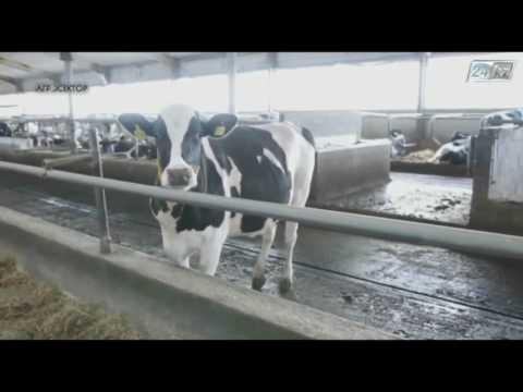 Агросектор. Кто дает больше молока?