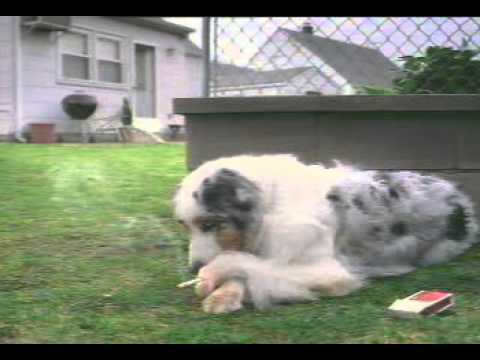 Smoking Dogs Funy video