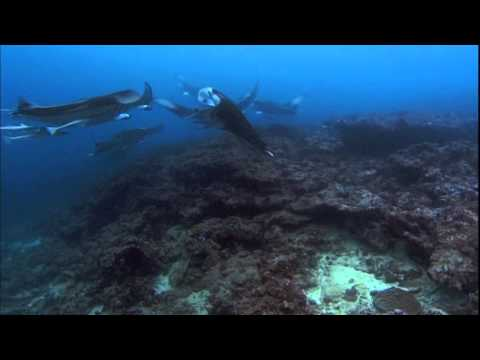 Ocean Odyssey 2010 720p part 5 (HD)