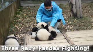 Baby Panda Joining A Fight With Nanny's Help | iPanda