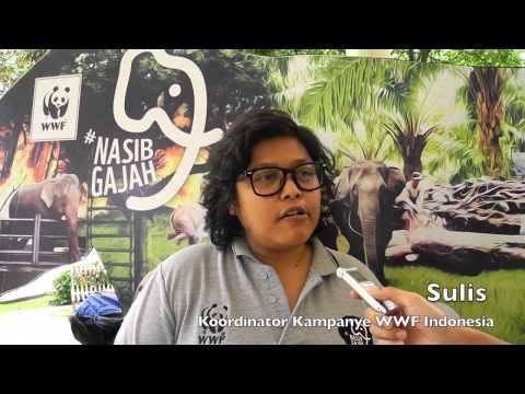 Asiknya Mengenal Gajah Sumatera