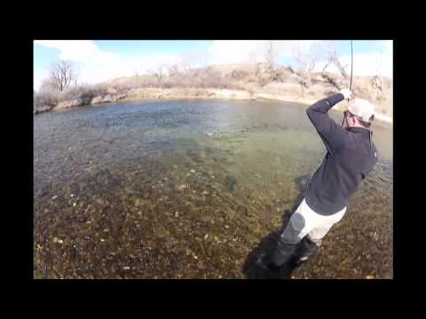 Bighorn River Fly Fishing March Midge Fishing