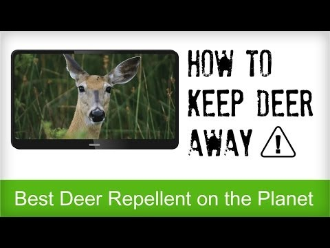 How To Keep Deer Out Of Your Garden Or Tomato Plants Organically How To Save Money And Do It