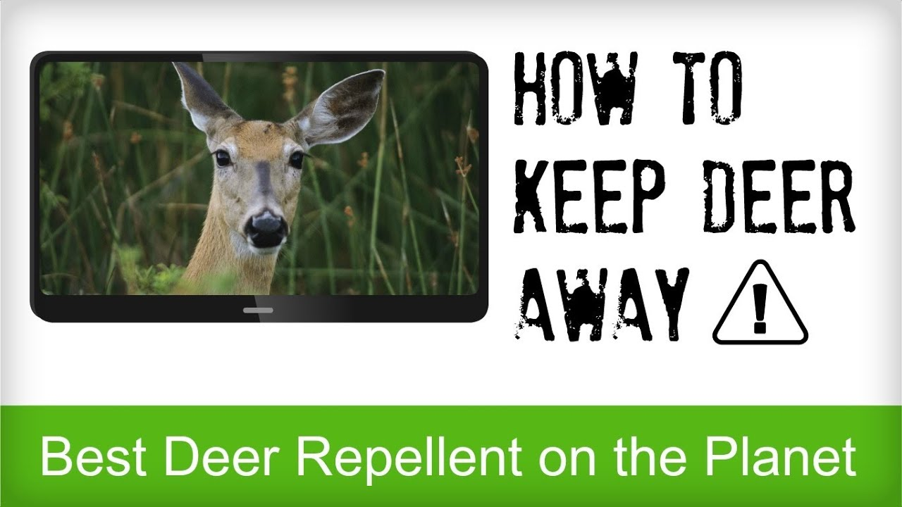 Best deer repellent reviews natural recipe for repelling for How to scare animals away from garden