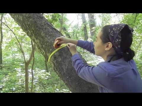 Forest Research Procedure