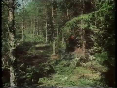 Skogen – Sveriges gröna guld (Visad: 8ggr, Betyg: , Antal kommentarer: 0st)
