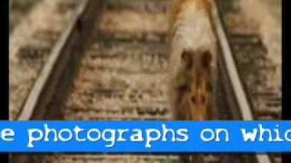Watch Alphaville Lassie Come Home video