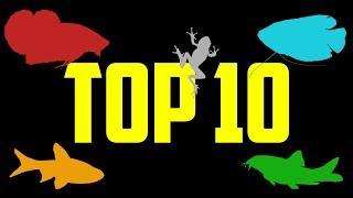 Top 10 Fish For 5 Gallon Aquariums