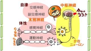 生物4章5話「5種類の脳」byWEB玉塾