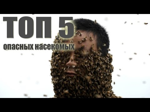 ТОП-5 САМЫХ ОПАСНЫХ НАСЕКОМЫХ .От BRAIN TV.