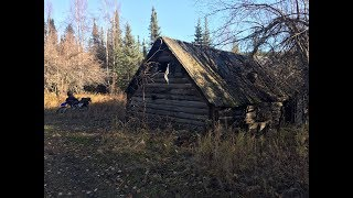 Metal detecting an old Alaskan gold rush cabin