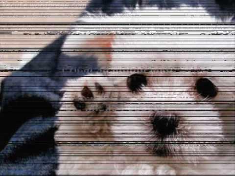 Molbe jednog psa! ♥