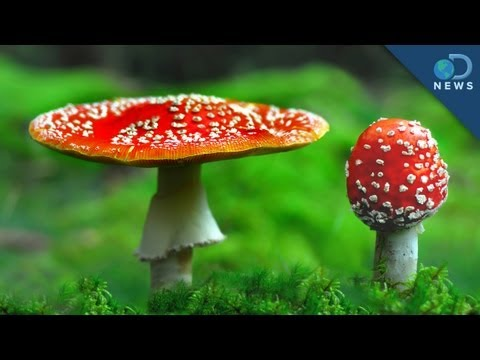 How To Grow Your Own 'Shrooms