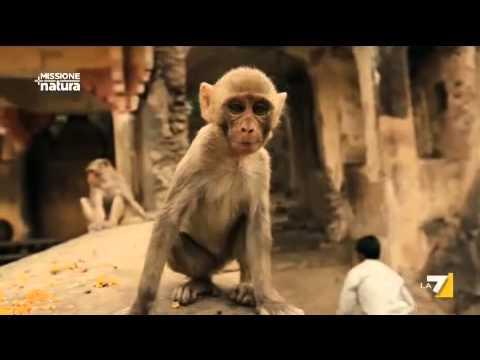 siti come badoo gratis zoosk chat