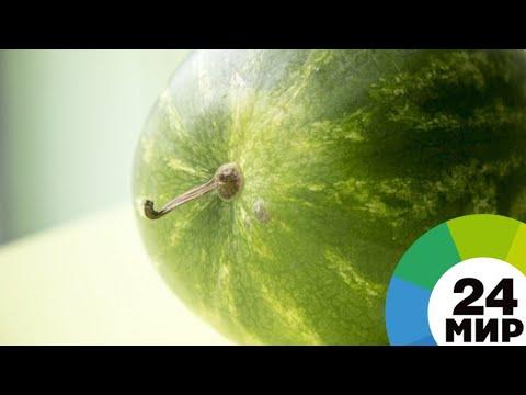 Жара в Таджикистане принесла рекордный урожай бахчевых - МИР 24