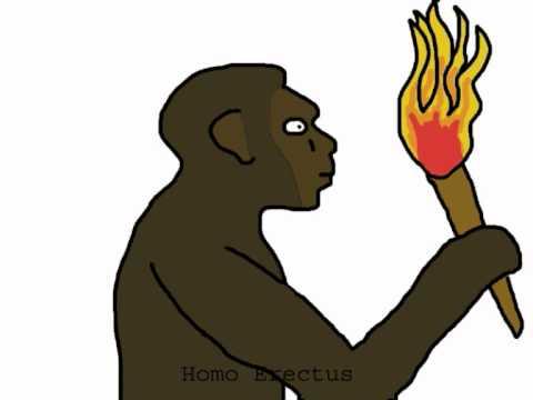 Early Man Evolution Evolution of Man