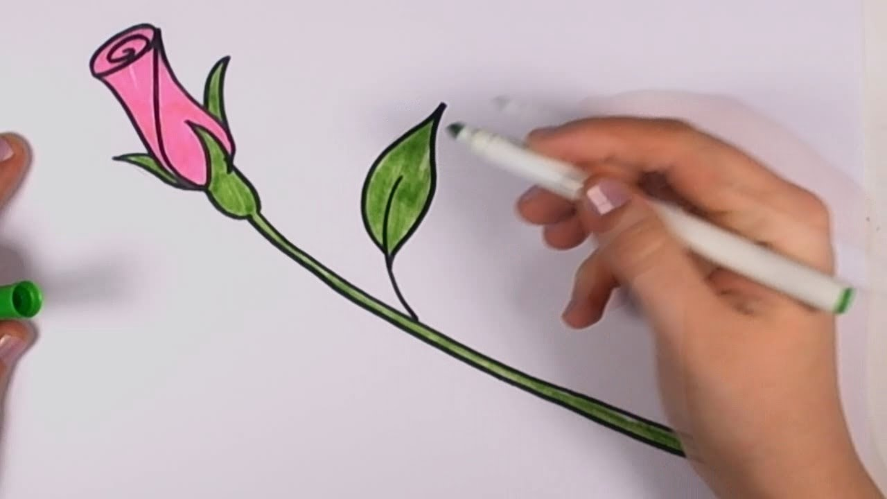 How to draw a rose for beginners pink rose bud art for Easy to draw roses for beginners