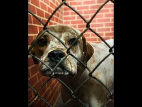 animal cruelty testing. Stop Animal Cruelty,Testing