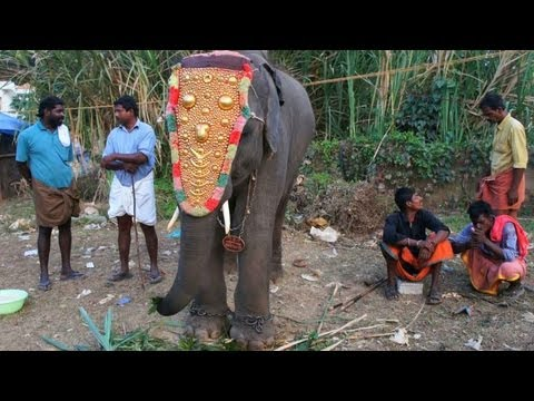 Puthan Kulam Shivan, the little jumbo in Peroorkkada Pooram