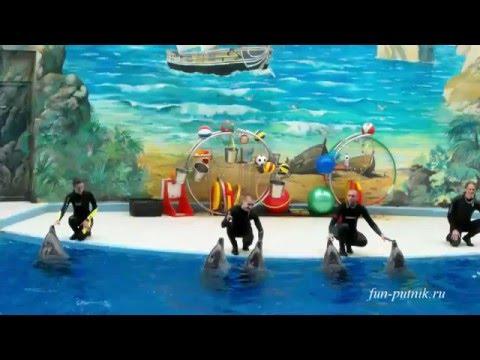 Шоу дельфинов в Сочи - море позитива, Dolphin Show In The Dolphinarium In Sochi