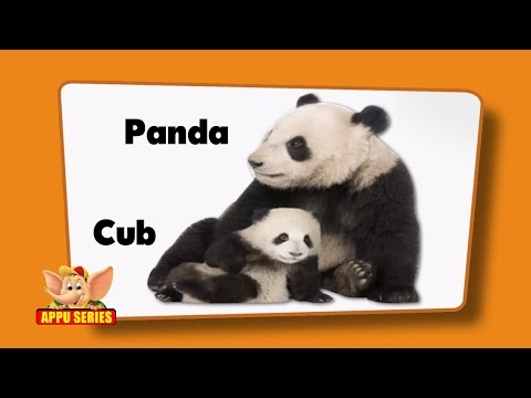 Flashcards for kids  - Animals and Their Young Ones