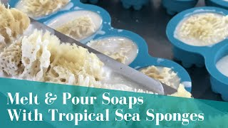 Tropical Sea Sponges Melt & Pour Soap Project