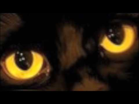 Ian Anderson - Old Black Cat